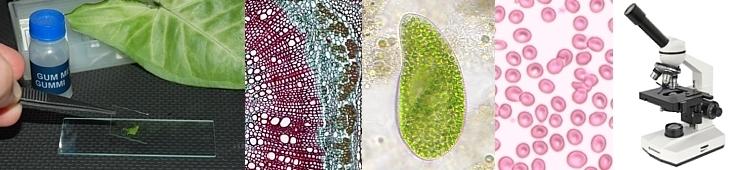 Prosvětlovací mikroskopy