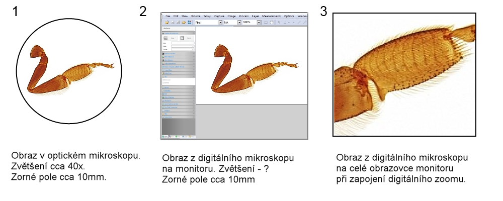 Zobrazení pomocí mikroskopů
